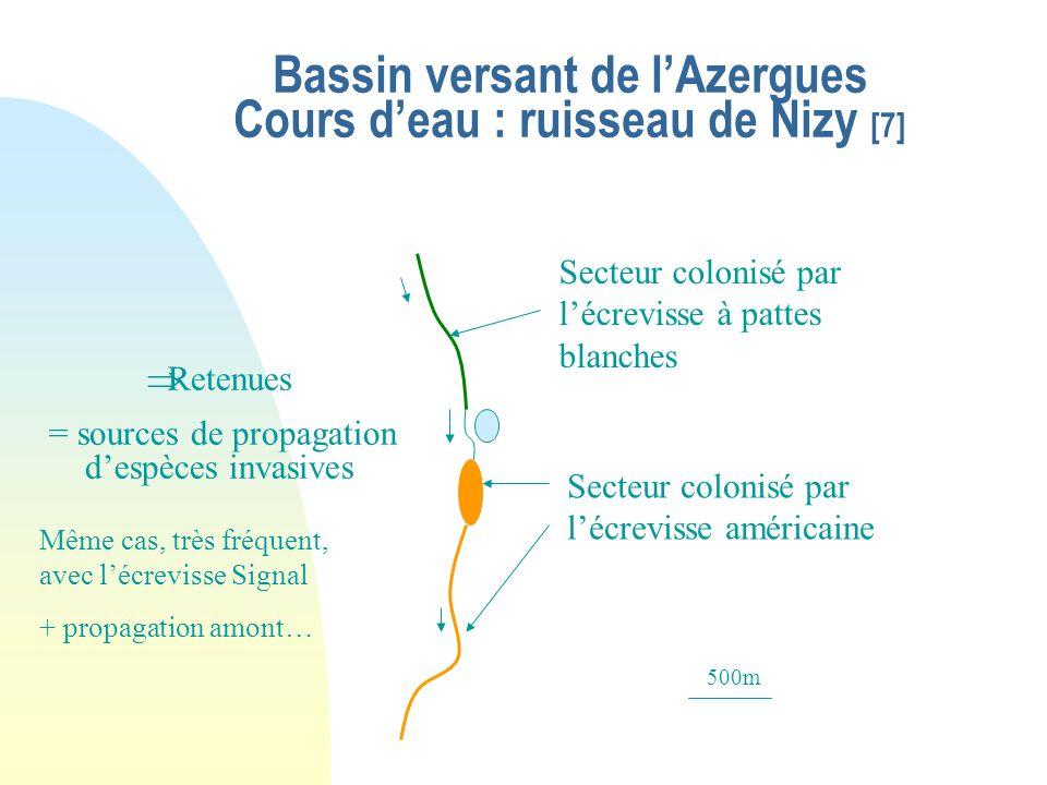 Bassin versant de l'Azergues Cours d'eau : ruisseau de Nizy [7]